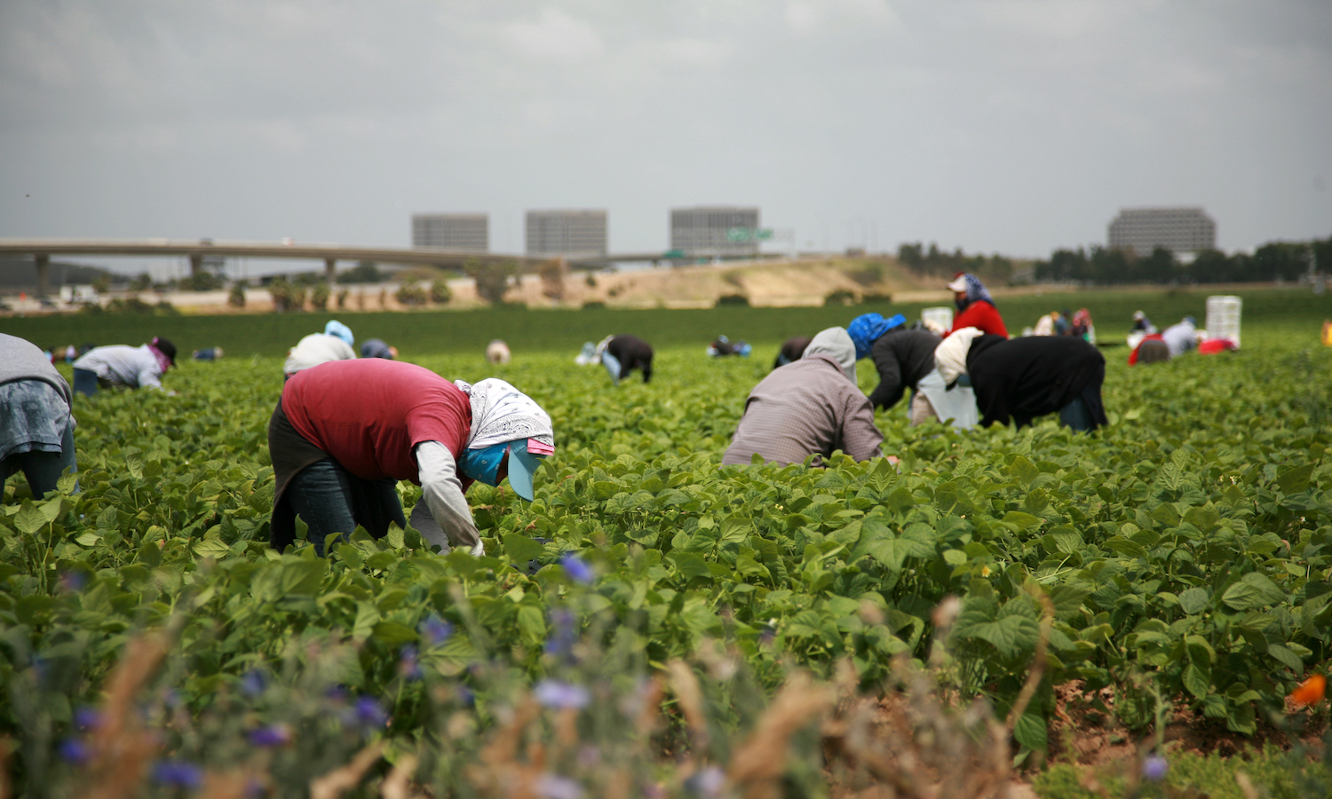 Border closures have farm industry concerned for loss of seasonal workers