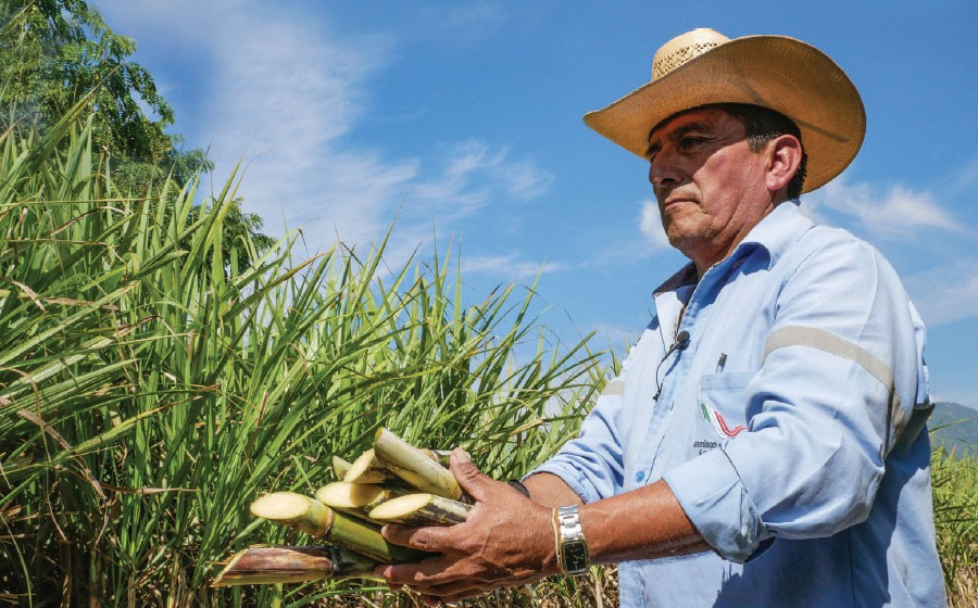 Mexican sugar industry will have limited exports
