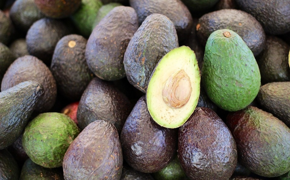 Mexican avocado exports break record